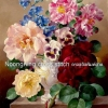 ดอกไม้ครอสติสจีนพิมพ์ลาย