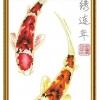ปลาคราฟมงคล ครอสติสจีนพิมพ์ลาย