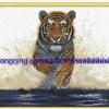 เสือเดินในน้ำ ชุดปักครอสติช พิมพ์ลาย งานฝีมือ