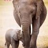 ช้างแม่ลูก ภาพติดเพชร ครอสติชคริสตรัล โมเสก Diamond painting