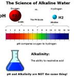 อัลคาไลนิตี้ คืออะไร ?