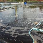 ความสามารถในการละลายของออกซิเจนในน้ำลดลง