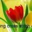 ดอกทิวลิปหลากสี ชุดปักครอสติช พิมพ์ลาย งานฝีมือ thumbnail 1