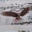นกคู่ ครอสติสพิมพ์ลาย thumbnail 21