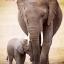 ช้างแม่ลูก ภาพติดเพชร ครอสติชคริสตรัล โมเสก Diamond painting thumbnail 1
